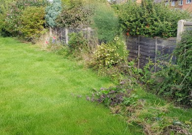 Garden Tidy Up | Garden Border Maintenance | Lee's Garden Services